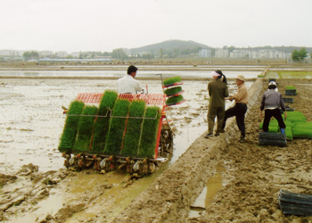 남쪽에서 공급된 이앙기로 북한 농민과 함께 모내기를 하는 장면.